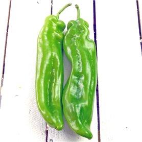 Pimiento verde ecológico kg.