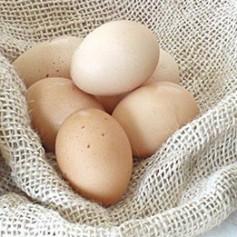 Huevos Ecológicos XL. 6 ud. Huevo Andalucía